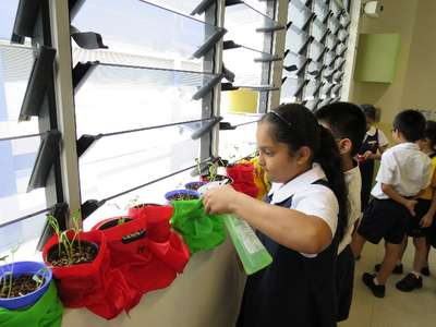 Students taking care of their kangkong plants by watering - 02